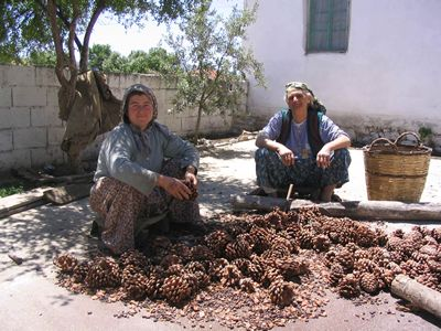 Kozak women sorting pinenuts