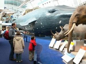 Mammals Gallery at the Natural History Museum, London