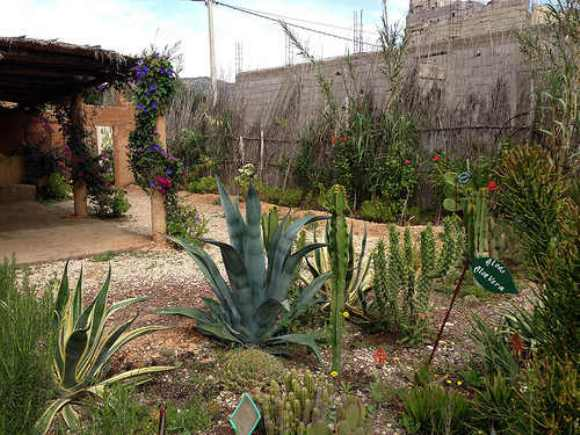 Botanic Garden at the Argan Oil Centre on the way to Paradise Valley, Morocco Photo: Heatheronhertravels.com