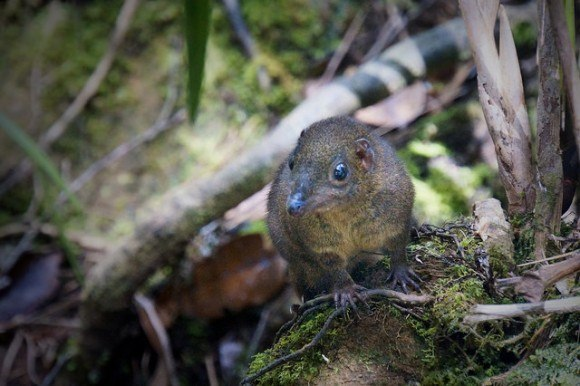"""A very friendly Borneo mountain squirrel who made a """"meep meep"""" sound like roadrunner"""