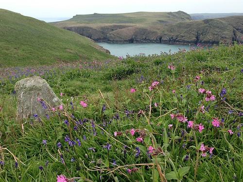 Wildflowers on Skomer Island in Pembrokeshire, Wales Photo: Heatheronhertravels.com