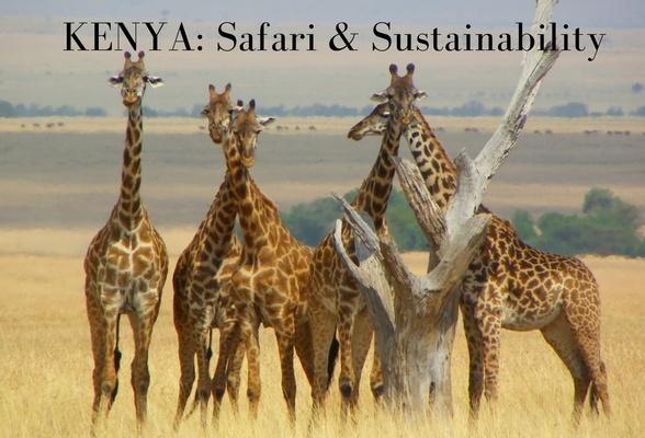 Kenya: Safari and Sustainability