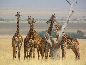 Masai Mara, Kenya Photo: Heatheronhertravels.com