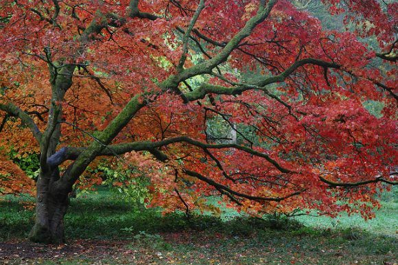 Autumn at Westonbirt Arboretum Photo: Chris Callaghan