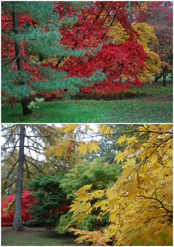 Westonbirt Arboretum Photo: Chris Callaghan