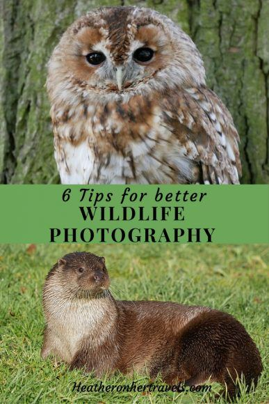Read about 6 tips for better wildlife photography