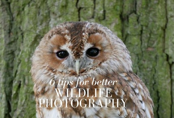 6 tips for better wildlife photography
