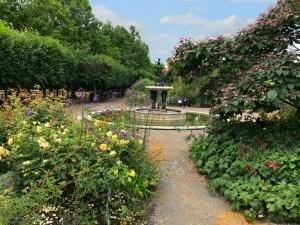 Rose garden in Hyde Park
