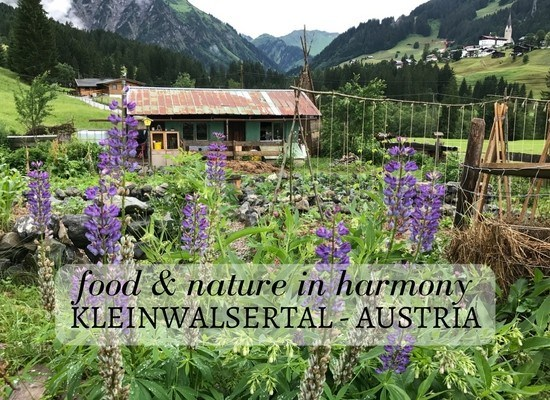 Read about food and sustainability in Kleinwalsertal Austria