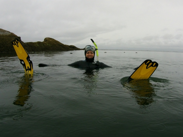 Snorkeling with seals in Nanaimo