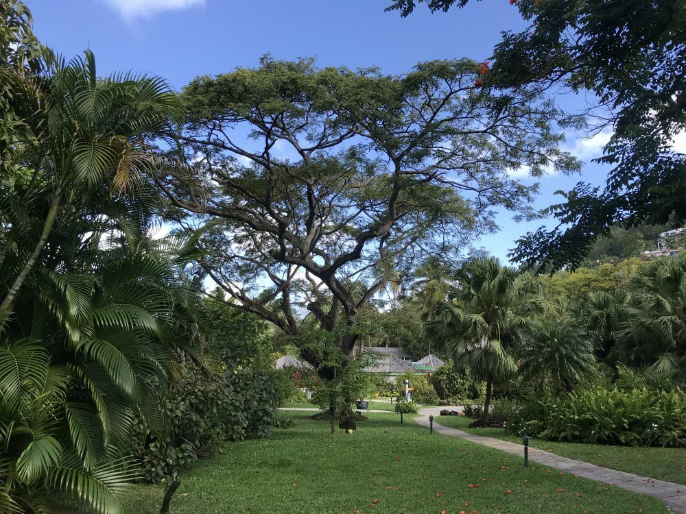 Botanic Gardens at East Winds St Lucia - Things to do in St Lucia