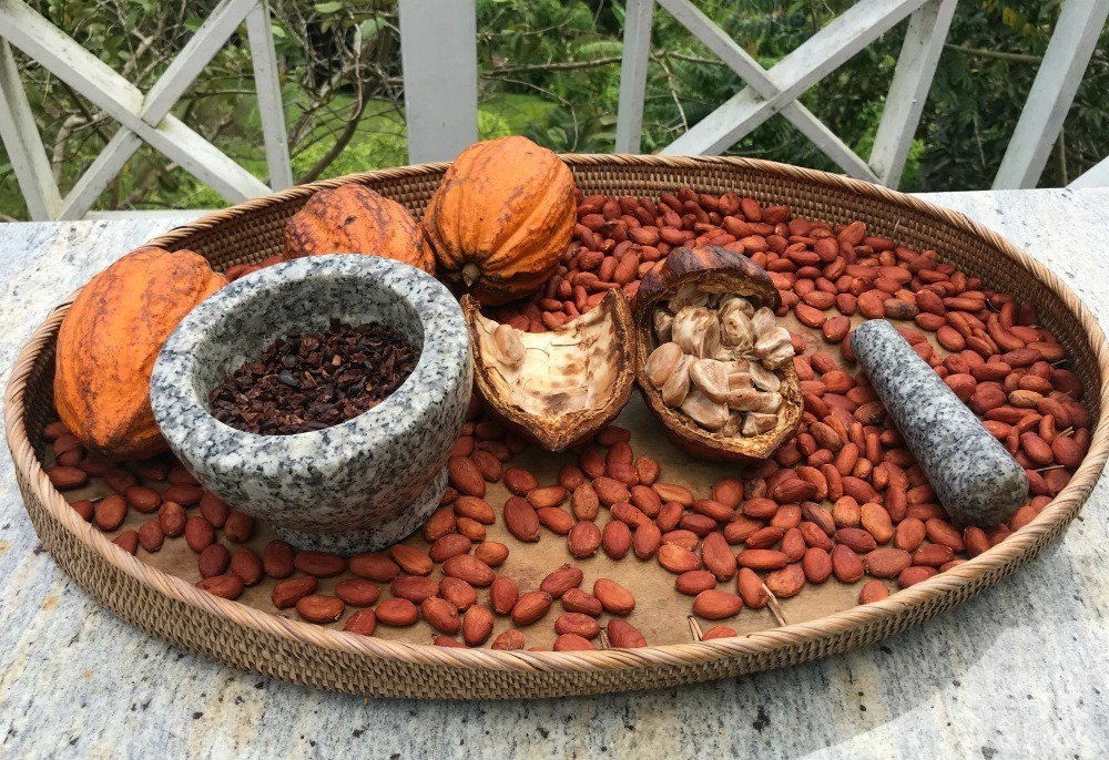 Cocoa beans in St Lucia - Things to do in St Lucia Photo Heatheronhertravels.com