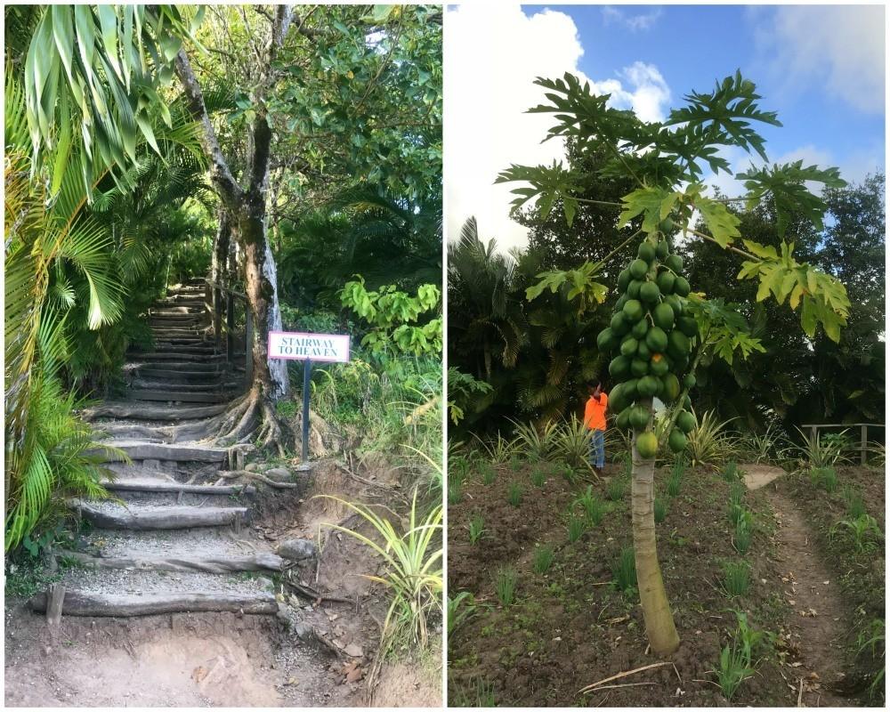 Tet Paul Nature Trail in St Lucia Photo Heatheronhertravels.com
