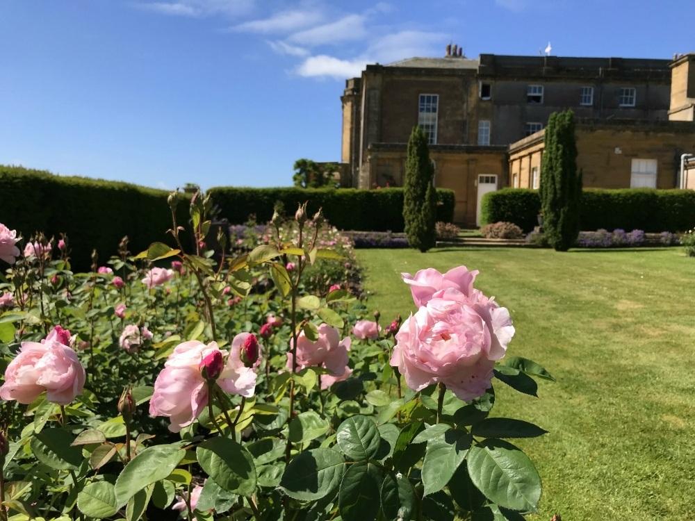 Rose garden at Warner Hotels at Cricket St Thomas Photo Heatheronhertravels.com.jpg