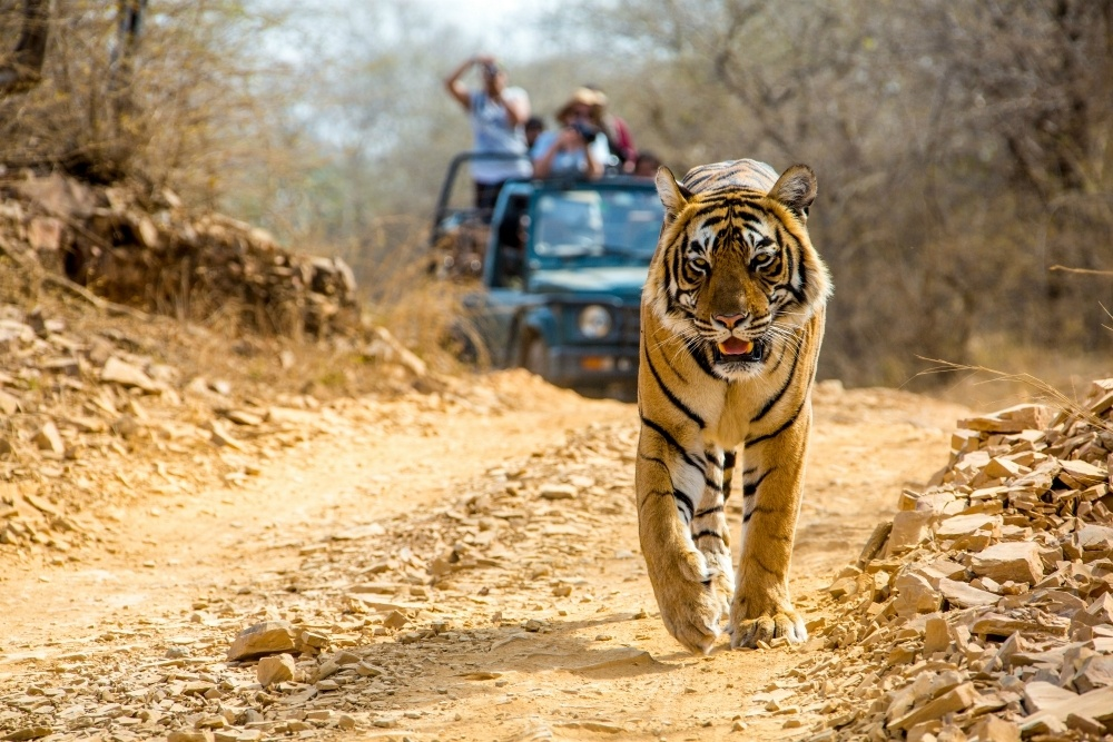 Tiger on Travelsphere India tour