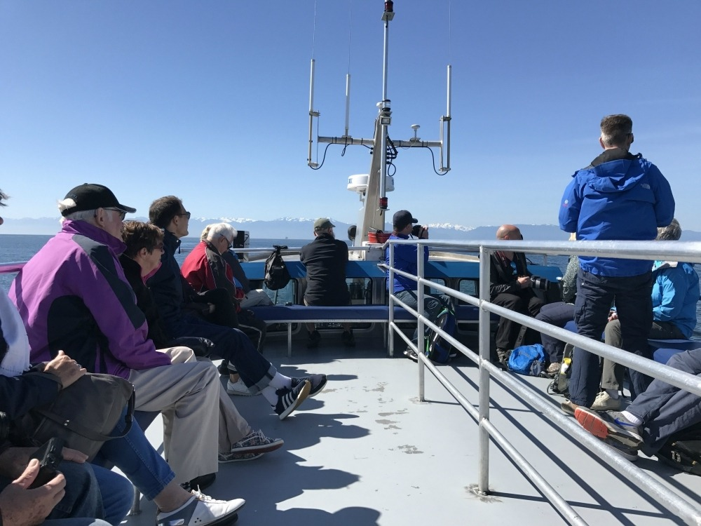 Whale Watching trip from Victoria Photo: Heatheronhertravels.com