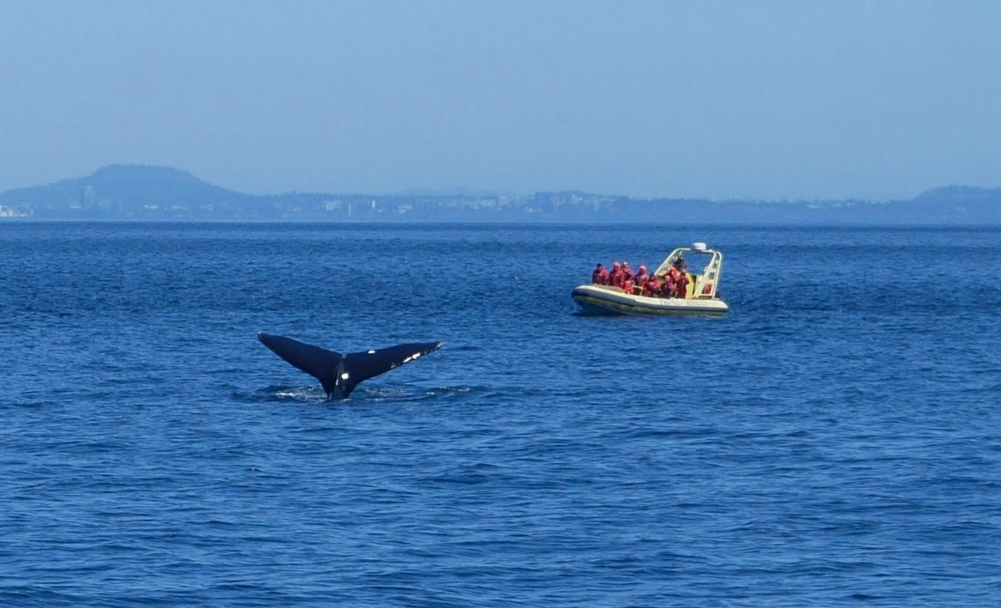 Whale watching in Victoria photo: Heatheronhertravels.com