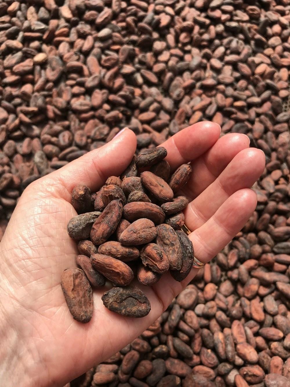 Cocoa beans at Belmont Plantation photo Heatheronhertravels.com