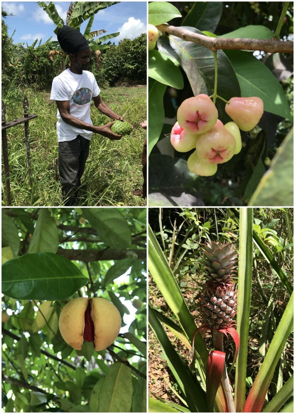 Plantation walk Grenada chocolate company Photo Heatheronhertravels.com
