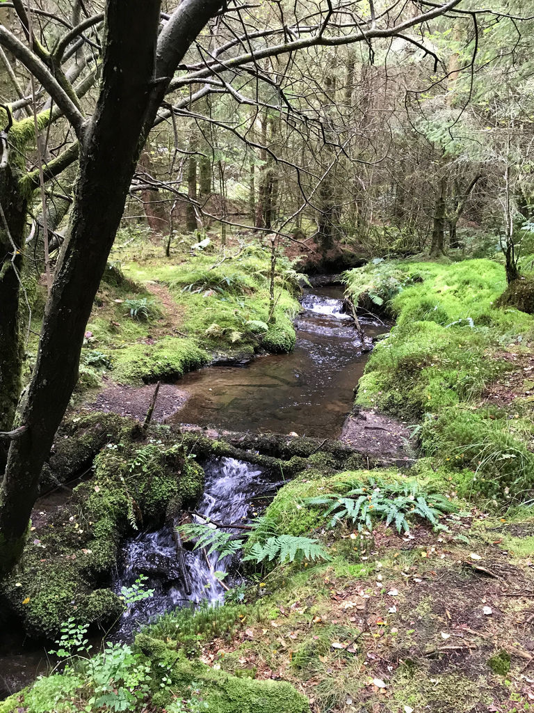 St Gwynnos forest 3 in South Wales Photo Heatheronhertravels.com