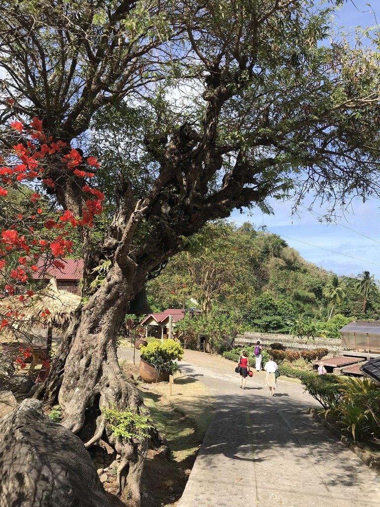 Belmont Estate Grenada Tours