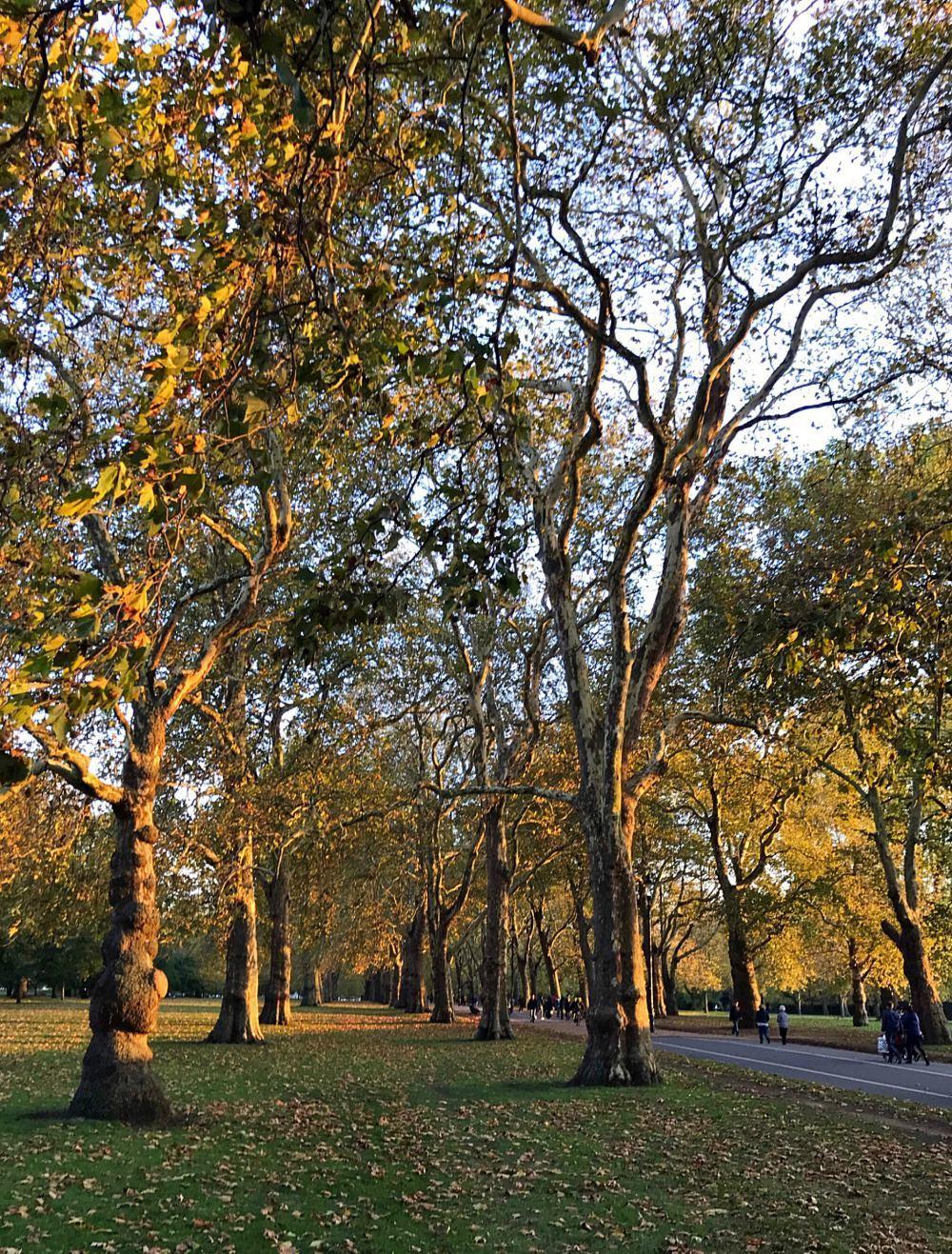 Hyde Park in London Photo Heatheronhertravels.com