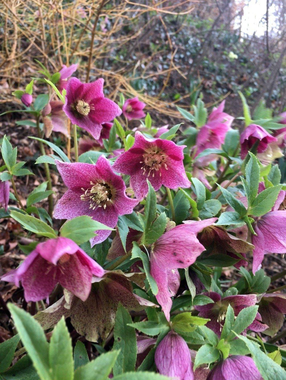 Painswick Rococco Garden 4 Photo Karis Bouher