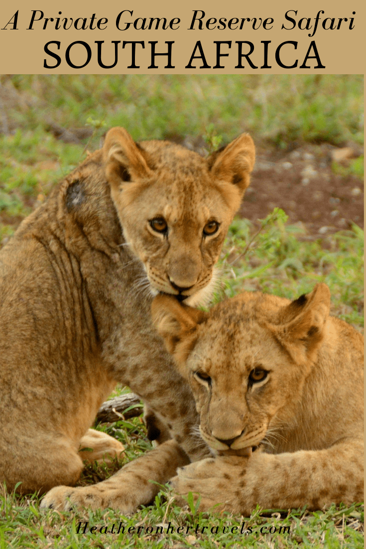 What to expect on a Private Game Reserve Safari in South Africa