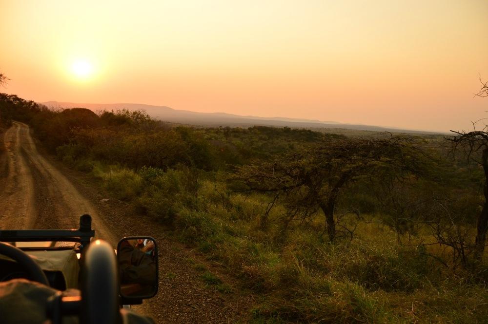 Sunset game drive in Thanda Game Reserve South Africa Photo Amanda O'Brien