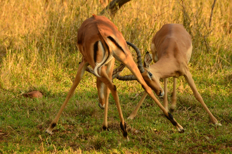 Thanda Game Reserve South Africa Photo Amanda O'Brien