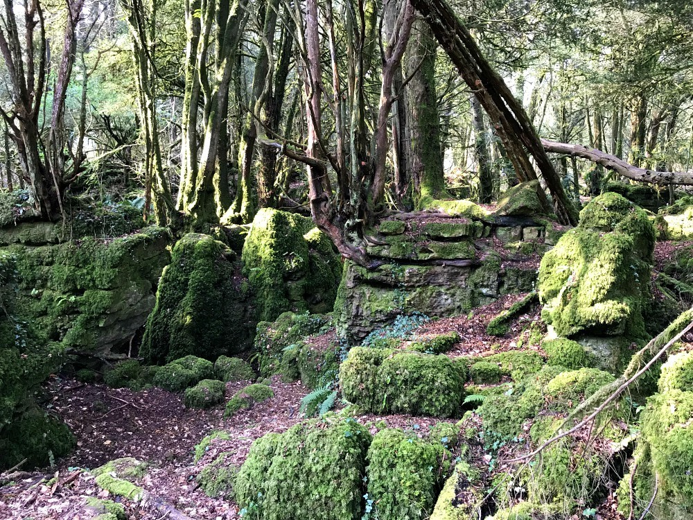 What to do in the Forest of Dean - Puzzlewood Forest of Dean Photo Heatheronhertravels.com