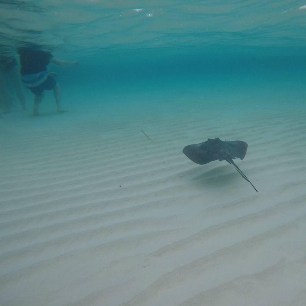 Stingray City on Grand Cayman Photo Heatheronhertravels.com