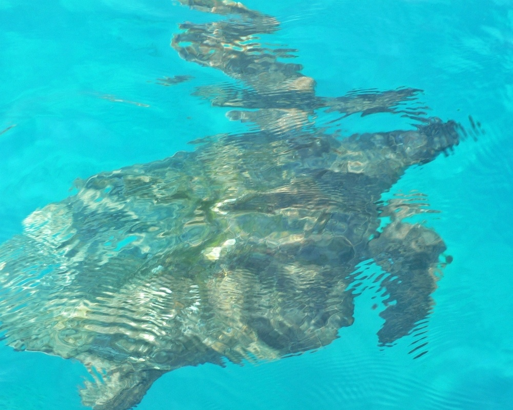 Turtles on Zakynthos