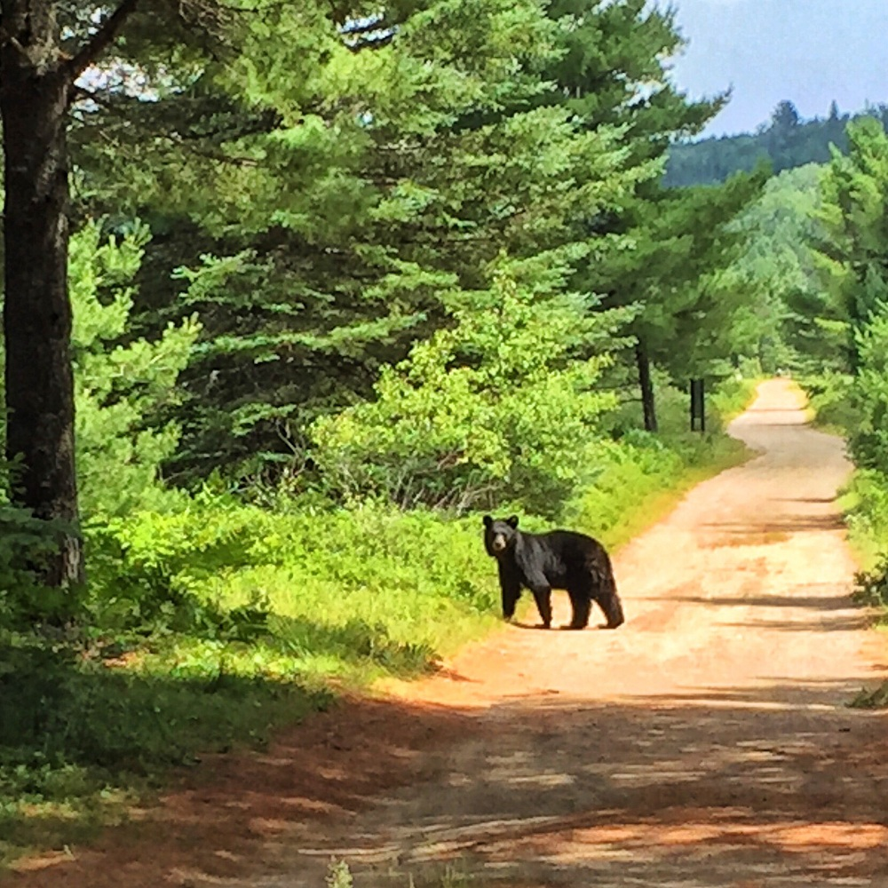 Algonquin Park, Ontario, Canada - Photo: Heatheronhertravels.com