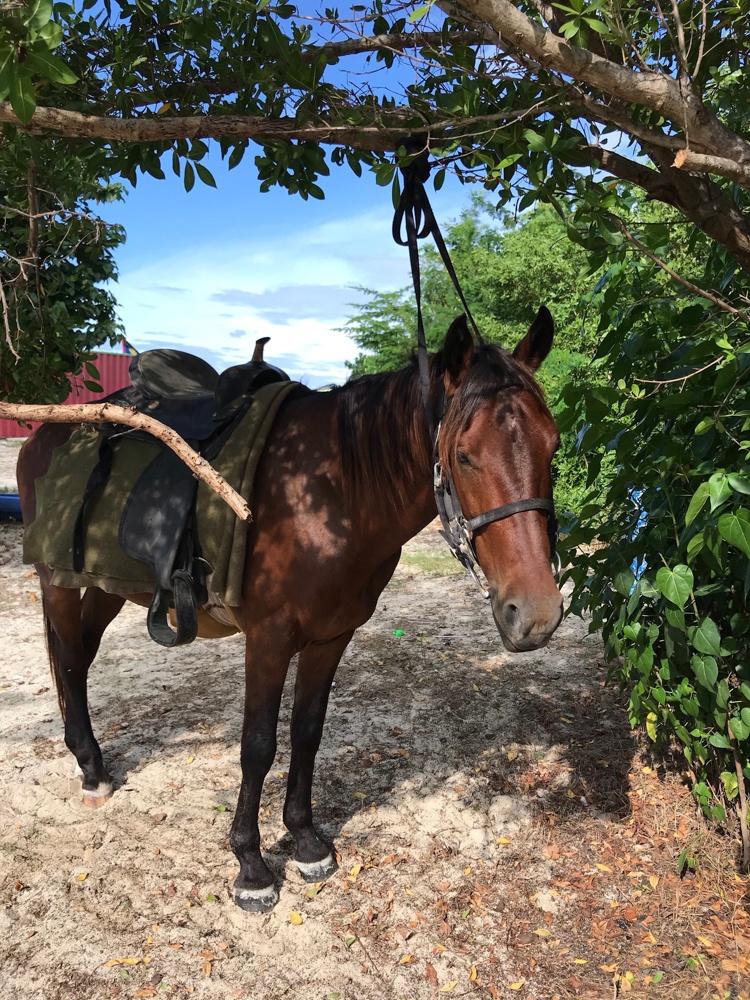 Horse riding in Antigua Photo Heatheronhertravels.com