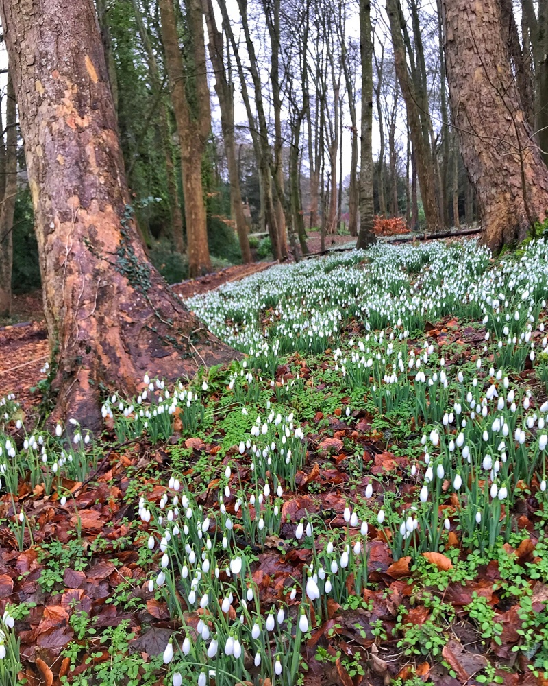 Snowdrops at Painswick Rococo Gardens in the Cotswolds Photo: Heatheronhertravels.com