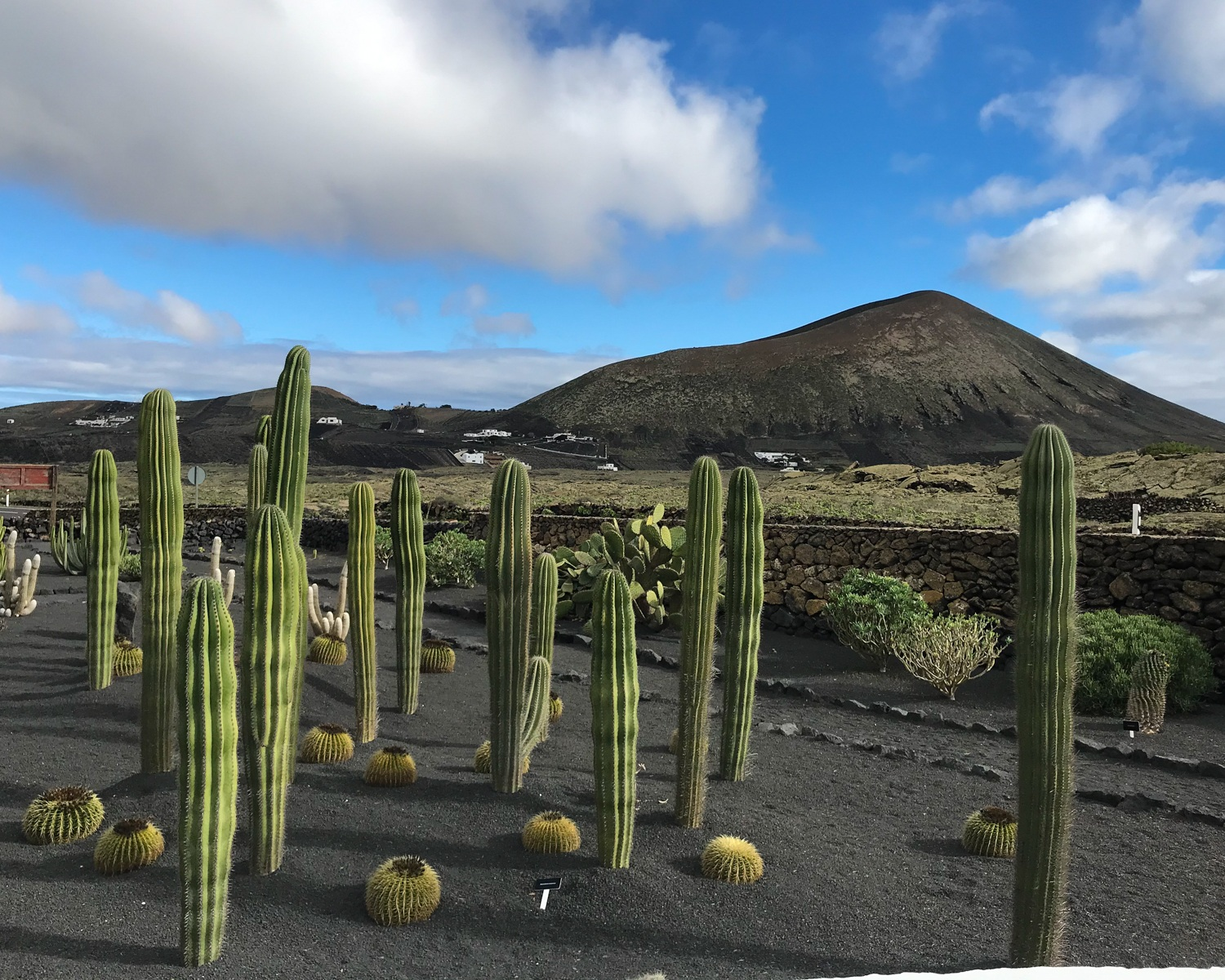 Things to do in Lanzarote - take a wine tour