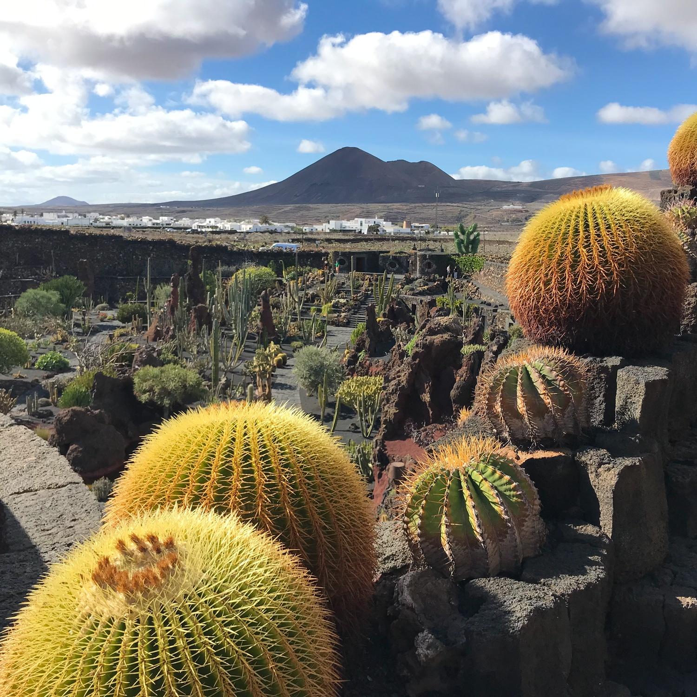 Jardin Cactus in Lanzarote Photo Heatheronhertravels.com