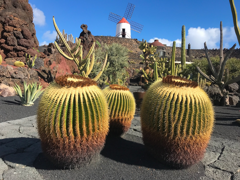 Jardin de Cactus Lanzarote Photo Heatheronhertravels.com